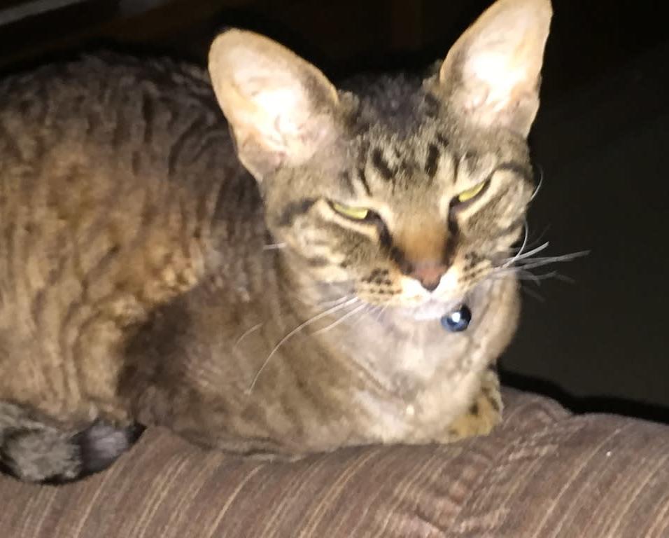Finnie-Tiger Norris
